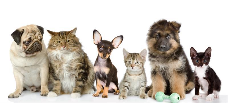 Sağlıklı evcil hayvanlar için 5 öneri